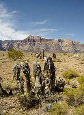 Red Rock 2014 006