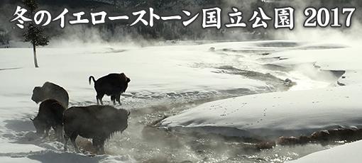 冬のイエローストーン国立公園 2017