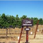 カリフォルニアワインカントリーの旅 ナパ編 その3