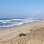 大砂丘 Marina Dunes Preserve