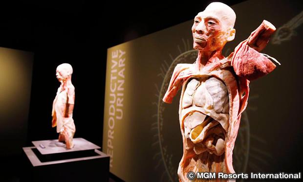 ボディーズ ザ エギジビション Bodies… The Exhibition