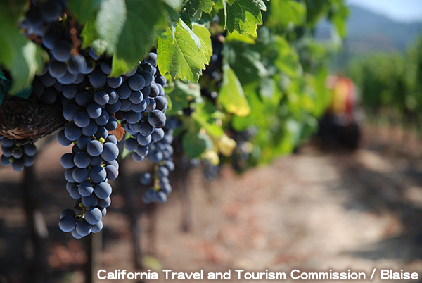 カリフォルニア ワイン カントリー California Wine Country
