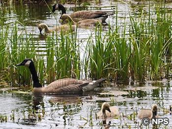 水辺の野鳥 Water Birds