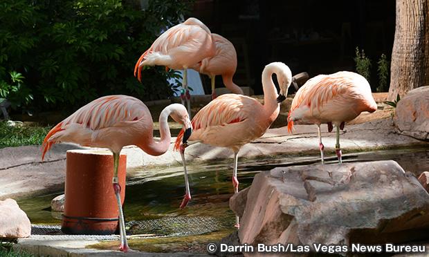 フラミンゴ・ワイルドライフ・ハビタット Flamingo Wildlife Habitat