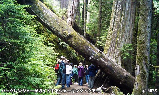 グローブ・オブ・ザ・パトリアーチズ・トレイル Grove of the Patriarchs Trail