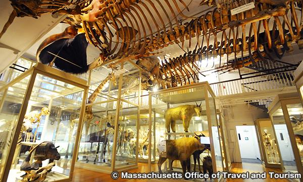 ハーバード大学自然史博物館 Harvard Museum of Natural History