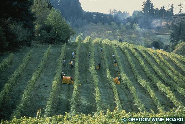 オレゴンワインの歴史