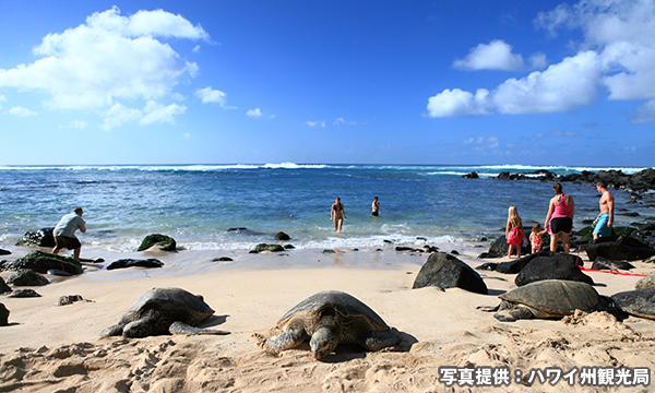 ラニアケア・ビーチ Laniakea Beach