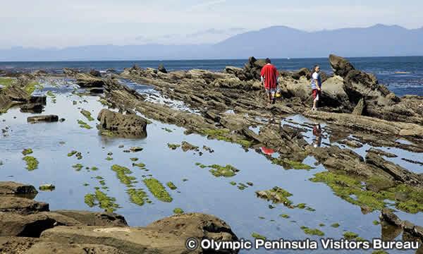 オリンピック半島の海岸