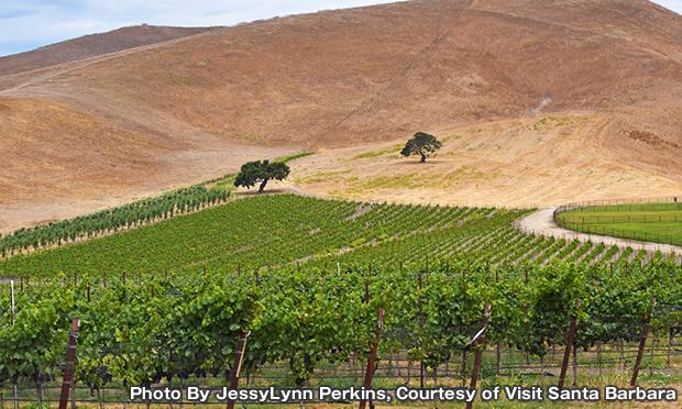 ペンス ヴィンヤード & ワイナリー Pence Vineyards & Winery