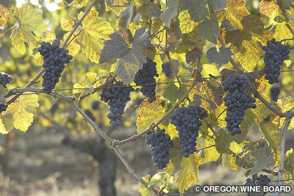 オレゴン南部のAVA(アメリカ葡萄栽培地域)