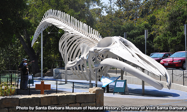 サンタバーバラ自然史博物館 Santa Barbara Museum of Natural History