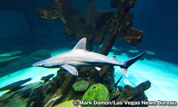 シャークリーフ・アクアリウム Shark Reef Aquarium