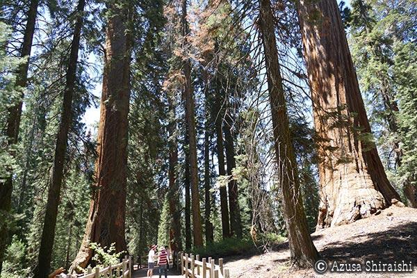 絶景のカリフォルニア 2016 キングスキャニオン国立公園&セコイア国立公園