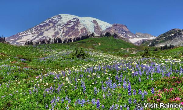 マウントレーニア国立公園 Mount Rainier NP