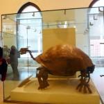 アメリカ自然史博物館の一番人気