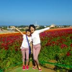 南カリフォルニアの旅 2016 フラワーフィールド