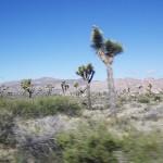 南カリフォルニアの旅 2016 ジョシュアツリー国立公園