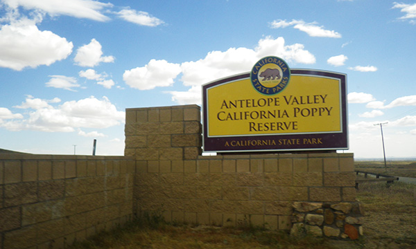南カリフォルニアの旅 2016 アンテロープ・バレー・カリフォルニア・ポピー保護区