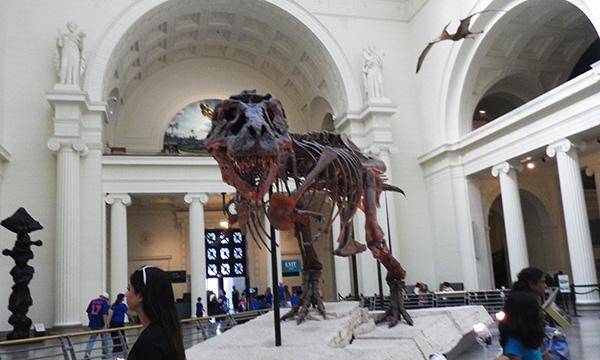 ちょこっとシカゴ 2016 フィールド自然史博物館
