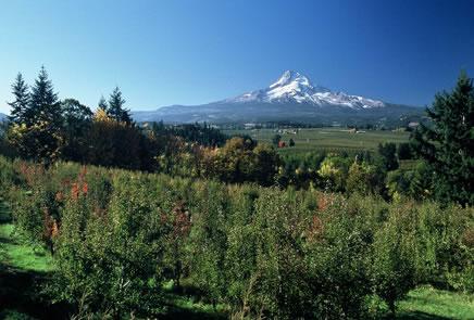 オレゴンコーストからクレーターレークそしてマウントフッドへ。オレゴン州の魅力満喫ドライブ。