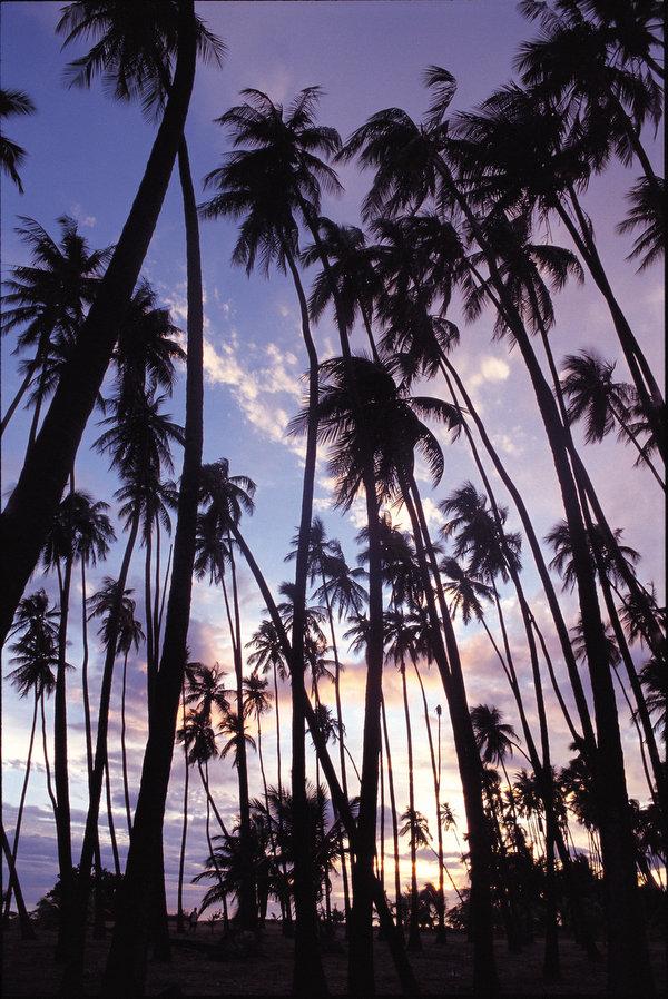 島の東端ハラワ渓谷へ ホオレフア~カラウパパ展望台~カウナカカイ~ハラワ渓谷