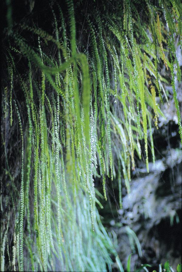 王家の結婚式が行われた シダの洞窟
