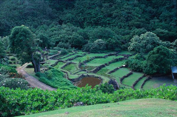 1000年前の段々畑 リマフリ・ガーデン