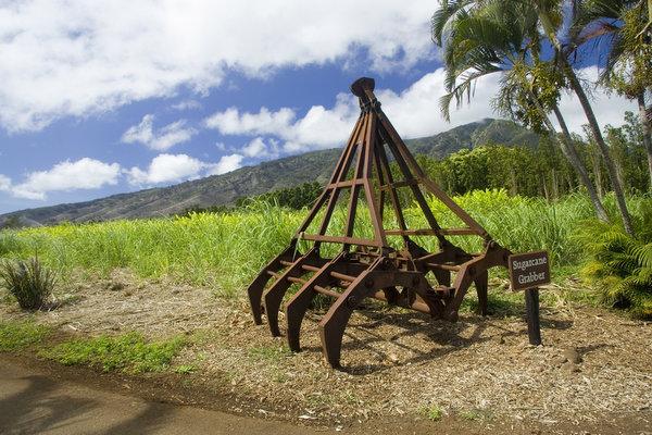 ハワイの植物が一堂に マウイトロピカルプランテーション