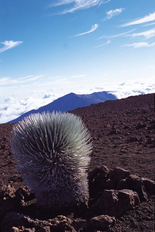 標高3055mの山 ハレアカラ国立公園