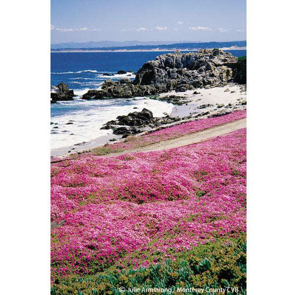 ピンクに染まる海岸線