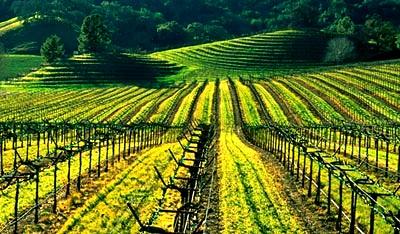 ソノマ カウンティ Sonoma County 昔ながらのワイナリーが佇む谷