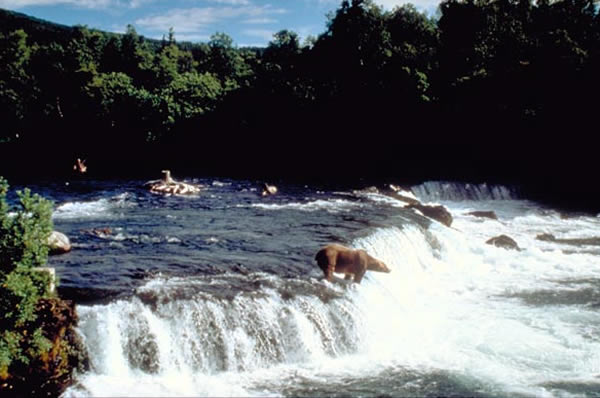カトマイ国立公園 Katmai National Park and Preserve