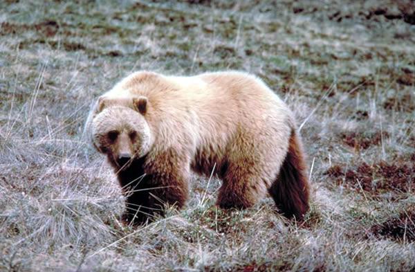 コディアック国立野生動物保護区 Kodiak National Wildlife Refuge