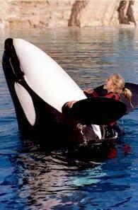 シーワールド・オーランド SeaWorld Orlando