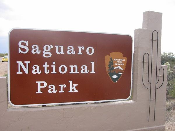 林立する巨大サボテン サワロ国立公園