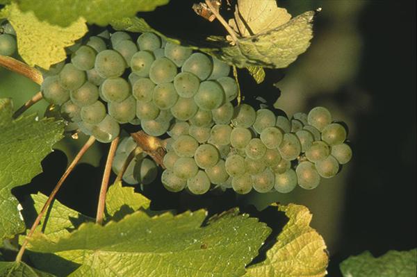 オレゴン州のワインブランド