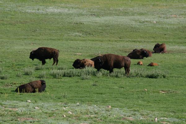 サウスダコタの大自然/カスター州立公園