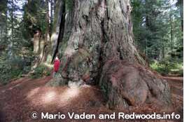 レッドウッド国立州立公園 Redwood National and State Parks