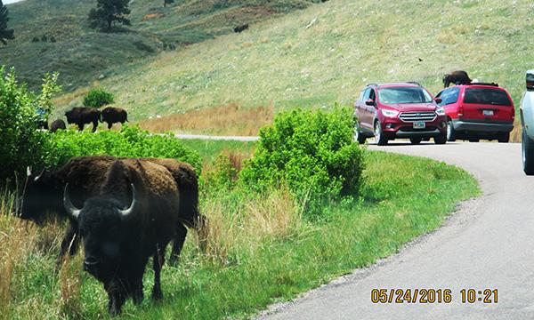 サウスダコタ探訪2016 カスター州立公園