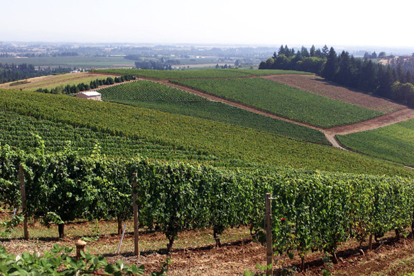 オレゴン州ワインカントリー