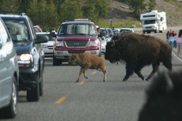 野生動物との遭遇