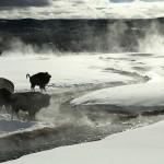 冬のイエローストーン国立公園の魅力