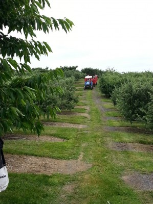 lawrenceorchard